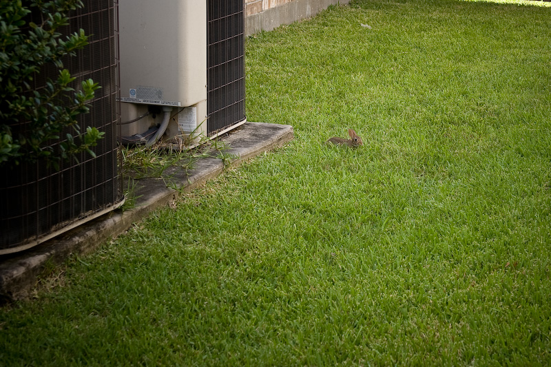 A rabbit in between me and my neighbor\